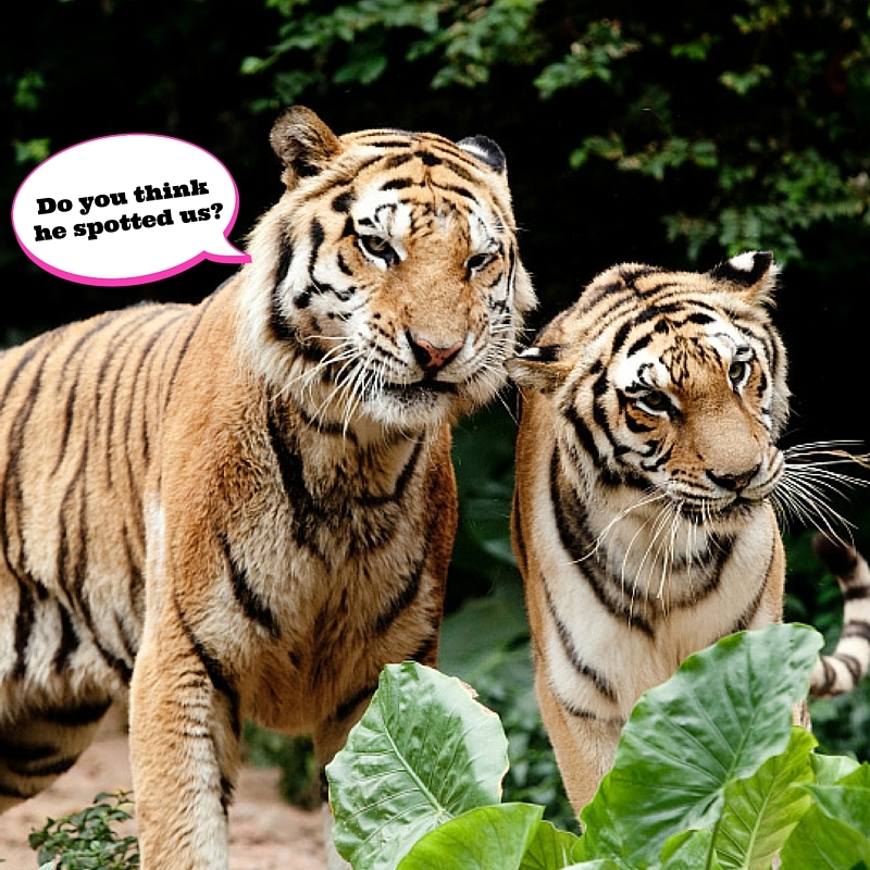 Five things we love about TIGERS! - Animals and You