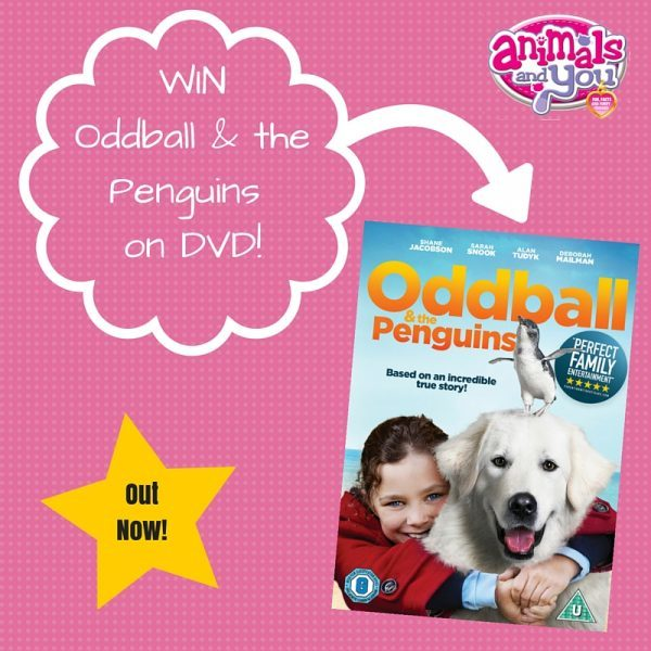 WIN Odbball on DVD!